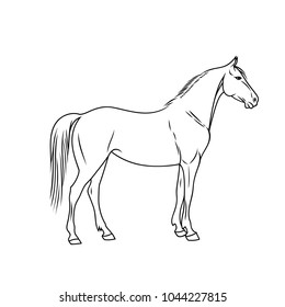 Elegant horse done in a minimal style. Vector illustration. Black and white vector objects.