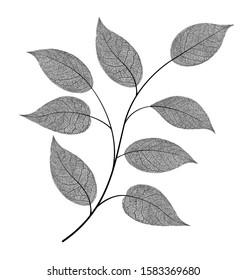Elegant vein leaf isolated on background. Black and white beautiful illustration. Minimalism style. Black and white vintage modern object, not autotrace