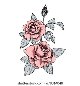 Elegant vignette with pink roses. Hand drawn isolated vector illustration in vintage style