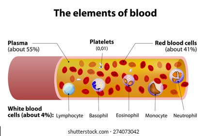 The elements of blood. blood vessel cut section.