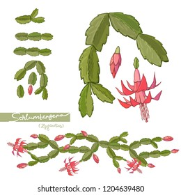 Elements of Christmas cactus and brushes. Vector hand drawn illustration.