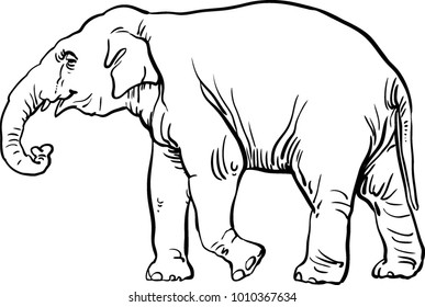 Elephant  black and white vector illustration