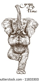 An elephant doing yoga stands in a lotus pose with a funny illustration in vector engraving style.