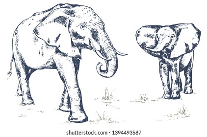 Elephant family, elephant with baby elephan. African elephant. Hand drawn illustration in sketch style. Vintage hand drawn vector illustration isolated on white background