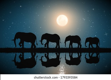 Elephant family on river bank. Animal silhouettes. Moon in starry sky