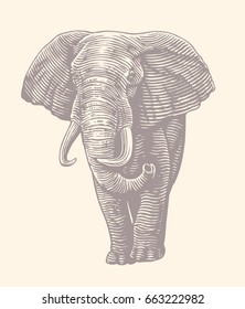 Elephant front view. Hand drawn engraving. Vector vintage illustration. Isolated on white background. 8 EPS