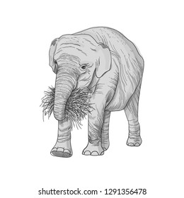 Elephant in full growth, holds dry branch, grass and roots with its trunk, sketch vector graphics monochrome drawing.