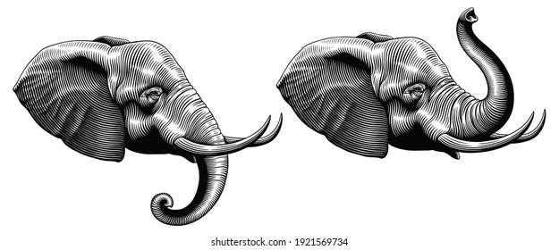 Elephant head. Art detailed editable illustration. Vector vintage engraving. Isolated on white background. 8 EPS