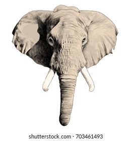 elephant head sketch vector graphics color picture