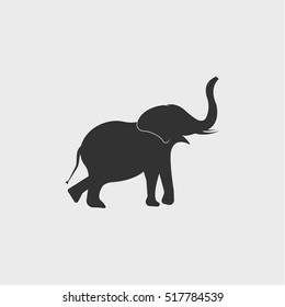 elephant icon, vector design