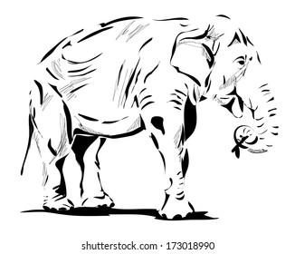 Elephant illustration isolated on white background