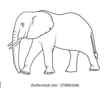 Elephant, line drawing side view picture isolated on white background