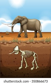 Elephant on the ground and fossil underground illustration