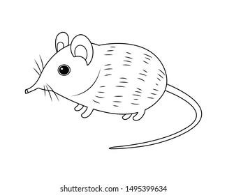 Elephant shrew vector cartoon colorless for coloring book. Long nose shrew cartoon. Weird mouse vector cartoon isolated on white background. Rare animal.