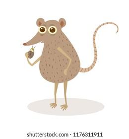 Elephant shrew vector cartoon illustration. Long nose shrew cartoon.