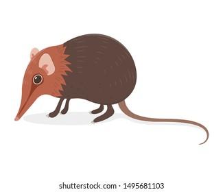 Elephant shrew vector cartoon illustration. Long nose shrew cartoon. Weird mouse vector cartoon isolated on white background. Rare animal.