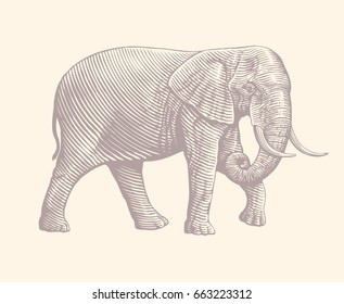 Elephant side view. Hand drawn engraving. Vector vintage illustration. Isolated on white background. 8 EPS
