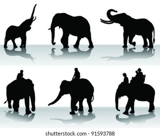 elephant silhouette with shadow, vector