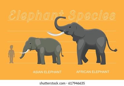Elephant Sizes Comparison Cartoon Vector