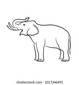 Elephant vector, illustration