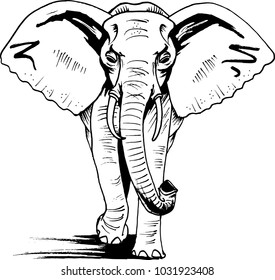 Elephant walking, front view. Africa, Black liner sketched style  drawing. Wildlife, animal