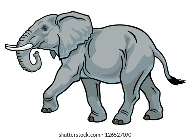 elephant,africa animal,side view picture isolated on white background