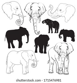 Elephants silhouette and sketch by hand.