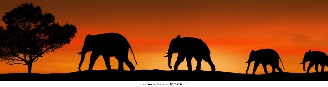 Elephants silhouette and tree in the savannah on beautiful on sunset, vector illustration