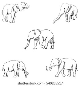 Elephants. A sketch by hand. Pencil drawing