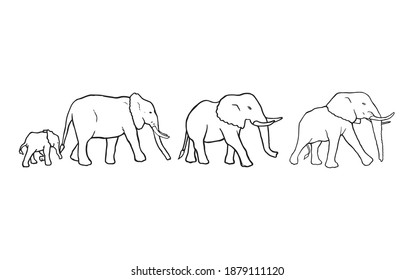 Elephants walking together in a group hand drawn set graphic. Big mammals exploring safari and nature. Animal family on the trip somewhere vector illustration. Jungle wildlife original outline sketch.