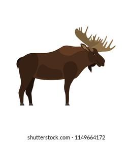 Elk color vector icon. Flat design