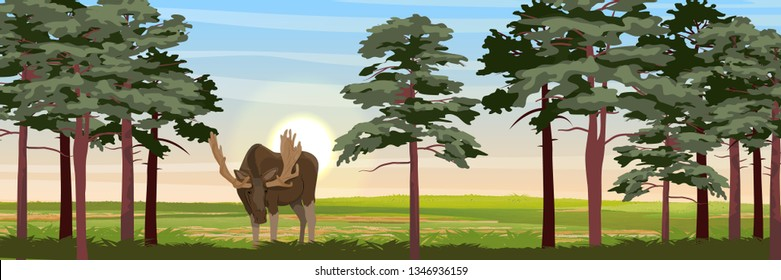 Elk in the meadow near the high pines. Wild animals of Eurasia, Scandinavia, Canada and America. Realistic Vector Landscape