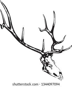 Elk skull head skeleton black and white logo icon vector illustration drawing sketch