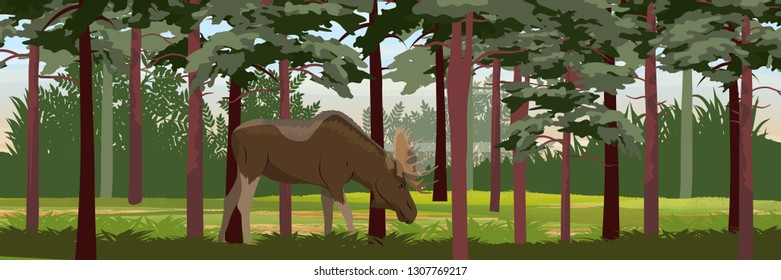 Elk in the thick pine forest. Wild animals of Eurasia, Scandinavia, Canada and America. Realistic Vector Landscape