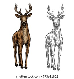 Elk wild animal sketch vector icon front view. Wild elk hind or stag wapiti mammal deer or moose species for wildlife fauna and zoology or hunting trophy symbol and nature zoo adventure design