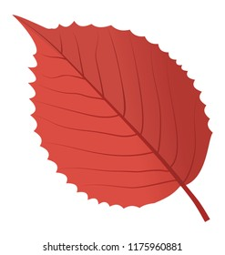 An elm leaf in red color also called dutch elm