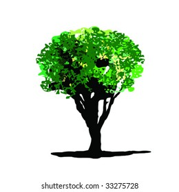 Elm Tree Vector
