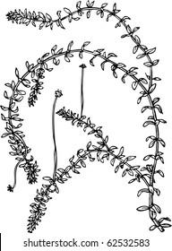 Elodea (waterweeds)