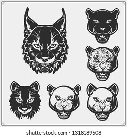 The emblems with bobcat, lion, panther and leopard for a sport team. Design for t-shirt.