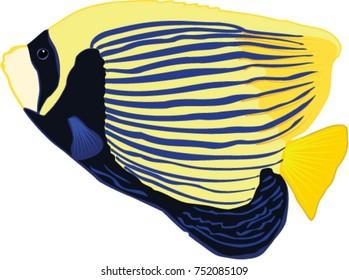 Emperor Angelfish illustration