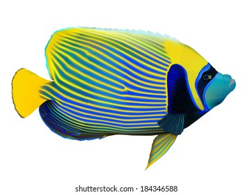 Emperor angelfish (Pomacanthus imperator) on white, vector illustration.