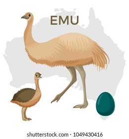 Emu bird, small and large isolated on white, small chick