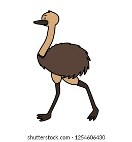 emu fauna on white background