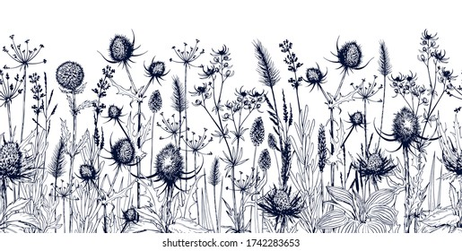 Endless horizontal background with meadow wild herbs and flowers. Hand drawn vectorl illustration isolated on white.