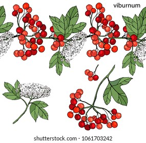 Endless horizontal border with ripe berries. Viburnum isolated on white