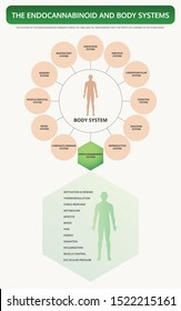 Endocannabinoid and Body Systems vertical textbook infographic illustration about cannabis as herbal alternative medicine and chemical therapy, healthcare and medical science vector.