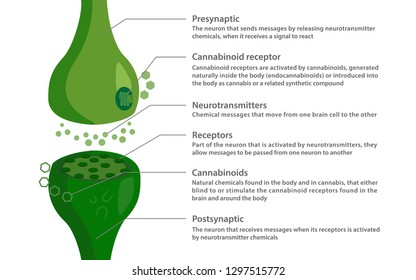 The endocannabinoid diagram, healthcare and medical illustration about cannabis