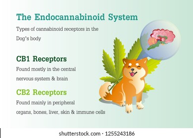 the Endocannabinoid system of dog,effect on body,vector infographic on white background.