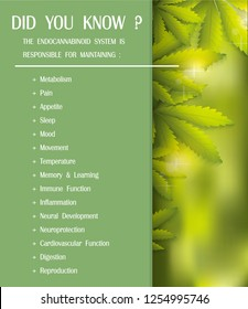 THE ENDOCANNABINOID SYSTEM IS RESPONSIBLE FOR MAINTAINING,vector infographic on cannabis natural background.