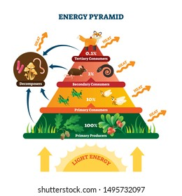 Energy pyramid vector illustration. Labeled biomass representation graphic. Educational bioproductivity levels ecosystem infographic. Wildlife percentage food system with producers and consumers.